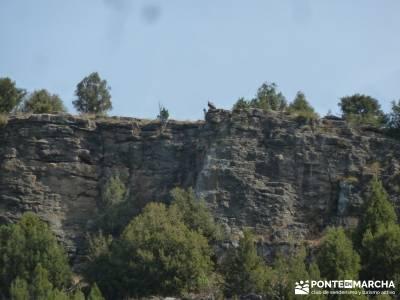 Cañones del Río Cega y  Santa Águeda  – Pedraza;berrea en cazorla puente el pilar